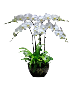 4 White Orchid Potted Plant Bonzai