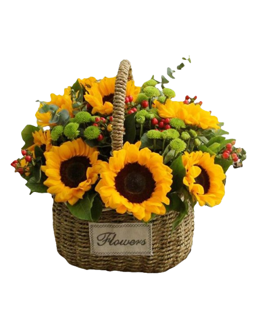 10 Sunflowers in Basket